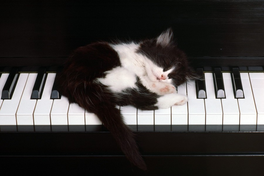Gatito dormido sobre un piano