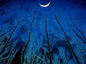 Luna sobre el bosque