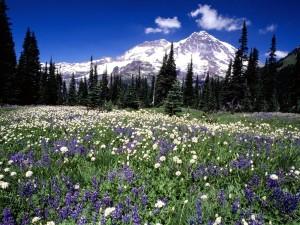 Flores bajo las montañas