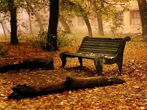 Banco cubierto de hojas