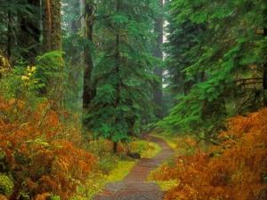 Camino en el interior de un bosque