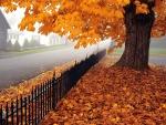Hermoso árbol con hojas otoñales