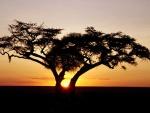 Sol entre las ramas del árbol