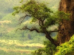 Gran árbol creciendo en la roca