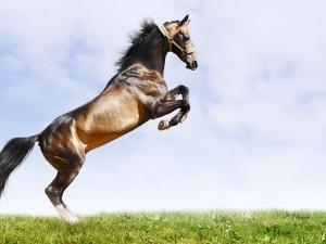 Un hermoso caballo