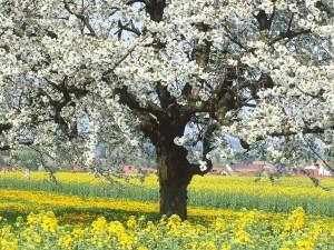 Hermoso árbol en flor