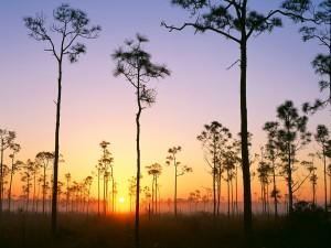 Sol iluminando los árboles