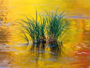 Plantas en el agua