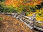 Árboles otoñales junto a una valla de madera