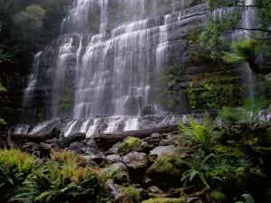 Helechos bajo la cascada
