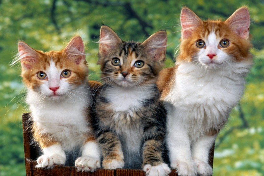 Tres lindos gatos