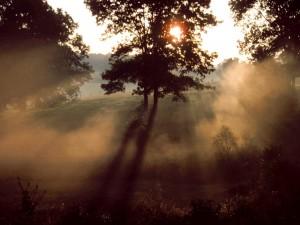 Sol iluminando el campo
