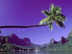 Bonita palmera sobre el mar