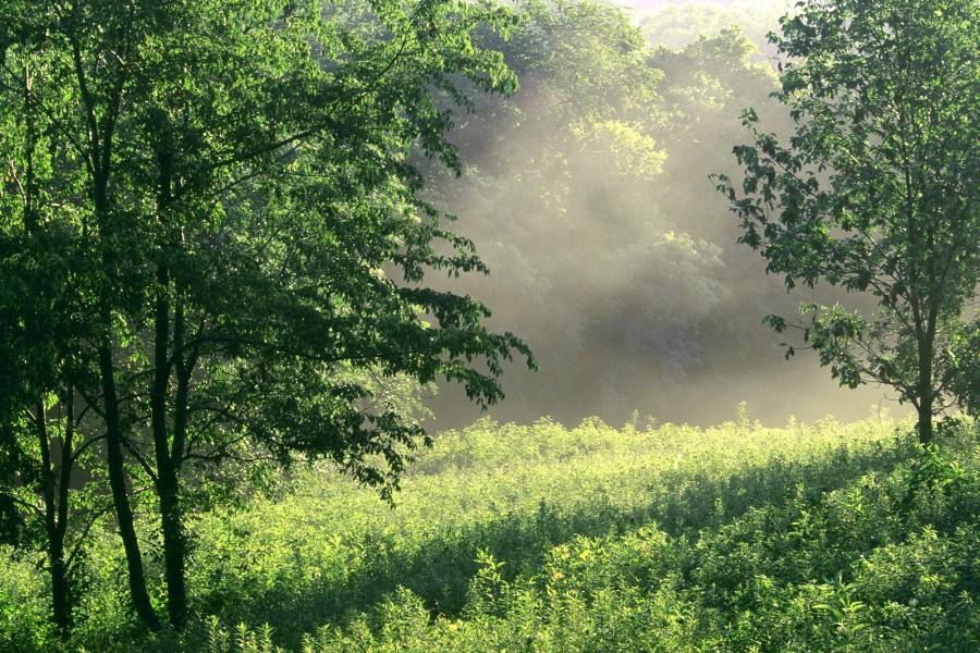 Sol brillando en un claro del bosque