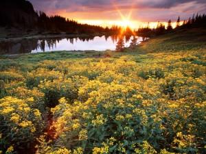 Sol iluminando un lindo paisaje