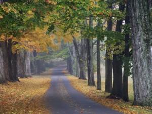 Árboles a ambos lados de la carretera