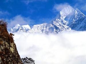 Cabra en lo alto de la montaña
