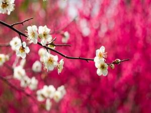 Flores en las ramas de un árbol