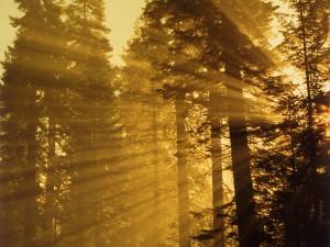 Rayos de sol filtrándose en el bosque