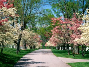 Árboles primaverales junto a la carretera