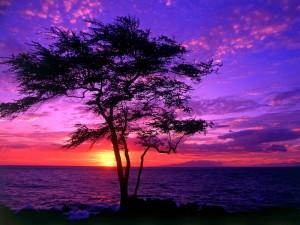 El sol asomando al amanecer