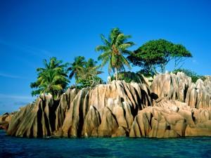 Palmeras en una isla rocosa