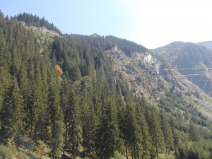 Pinos en la ladera de la montaña