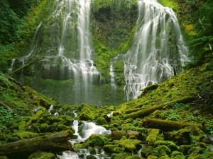 Hermosas cascadas en una zona verde