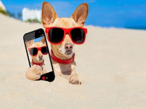 Perro en la arena con gafas y un móvil