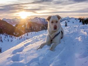 Perro blanco sentado en las montañas nevadas de Austria