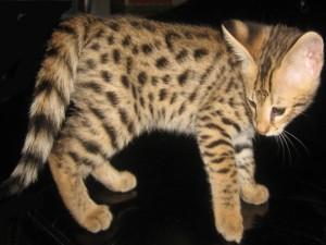 Lindo y pequeño gatito