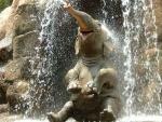 Elefante bañándose en una catarata