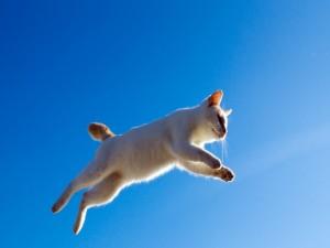 Gran salto de un gato