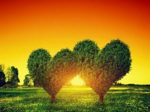 El sol brillando entre dos árboles con forma de corazón
