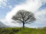 Árbol sin hojas en la colina