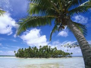 Isla cubierta de palmeras