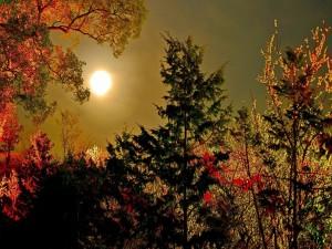 Noche de otoño en el bosque