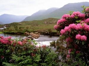 Flores y helechos a orillas del río