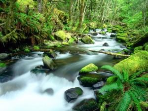 Troncos en el cauce del río