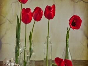 Tulipanes rojos en botellas de vidrio