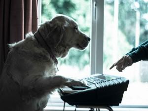 Perro músico