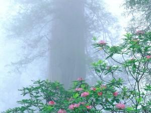 Flores y niebla en el bosque