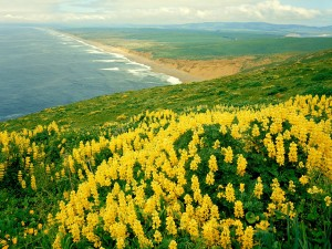 Flores amarillas en la costa
