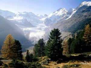 Piz Bernina y el glacial Morteratsch (Alpes suizos)