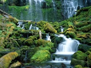 Hermosas cascadas en Oregón