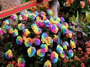 Creativas rosas multicolores