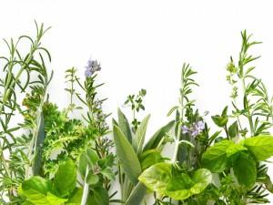 Pequeñas flores entre plantas verdes