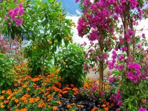 Arbustos con gran variedad de flores