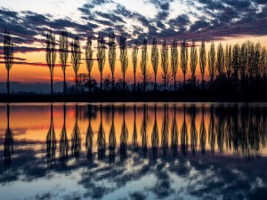 Árboles en hilera reflejados en el lago al amanecer