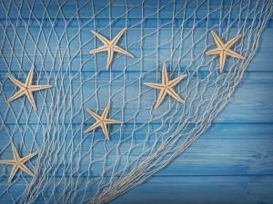 Estrellas de mar en una red de pesca